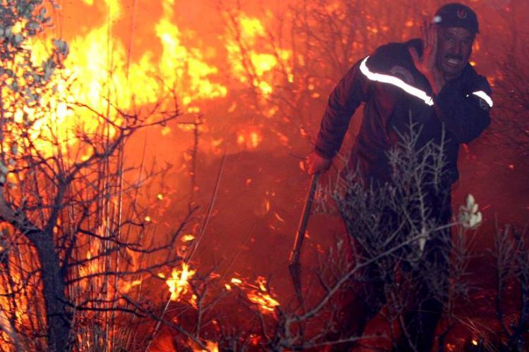 حرائق الغابات: توقيف 4 أشخاص بعين تموشنت