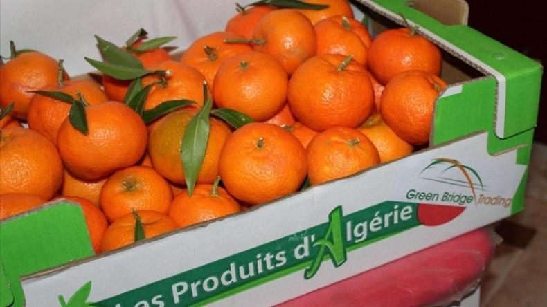هذه كمية المنتجات الفلاحية التي صدرتها الجزائر منذ بداية 2021