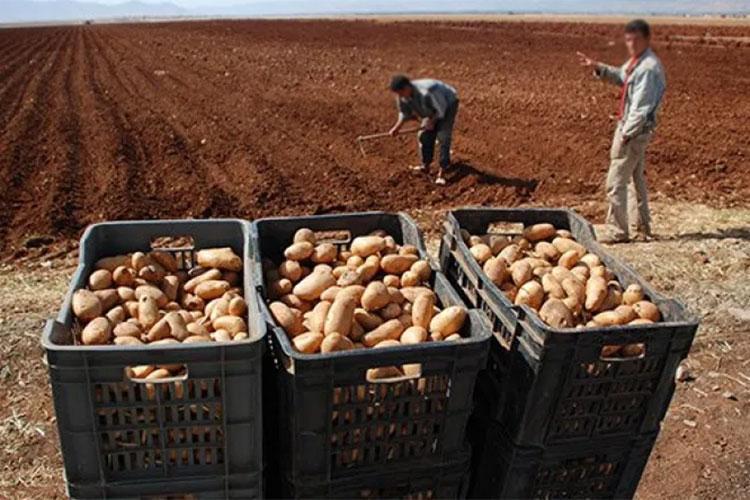 الجفاف يهدد الغذاء الرئيسي للجزائريين