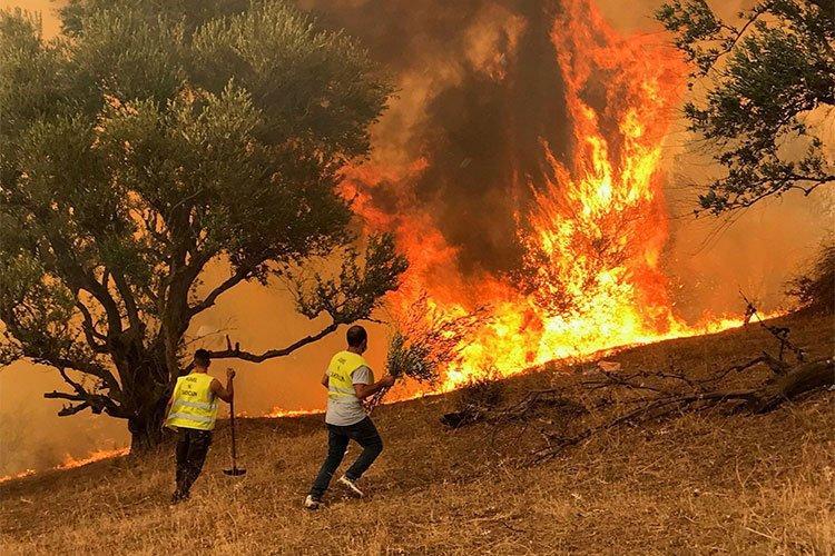 تغيّر المناخ وراء حرائق غابات مدمّرة.. والجزائر من ضحاياه!