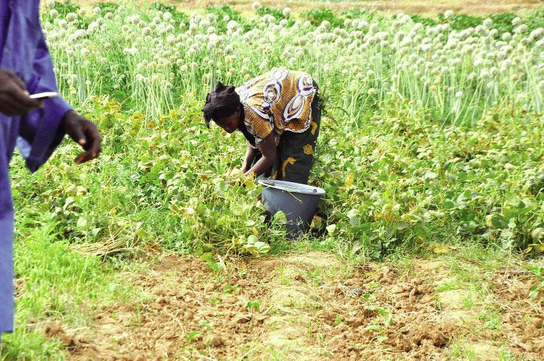 Mesures de lutte contre la COVID-19: des exploitants agricoles dans la précarité