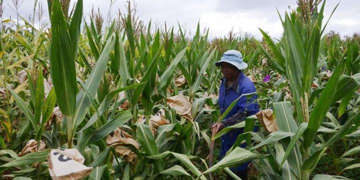 Quatre idées pour doper la productivité agricole en Afrique