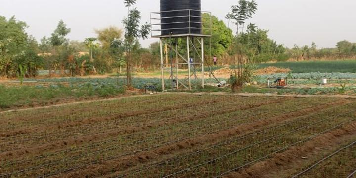 Agriculture de demain : le Burkina Faso à la pointe de la micro-irrigation