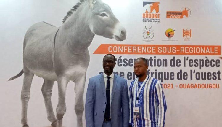 Préservation de l'espèce asine en Afrique de l'Ouest: Les acteurs en conclave à Ouagadougou