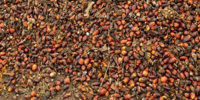 El Sahely étend son emprise dans l'agro-industrie centrafricaine