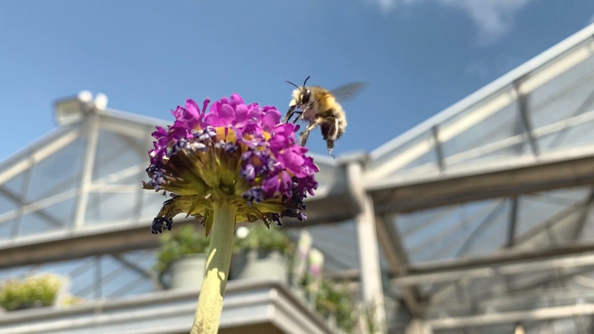 Paris : la famine des abeilles