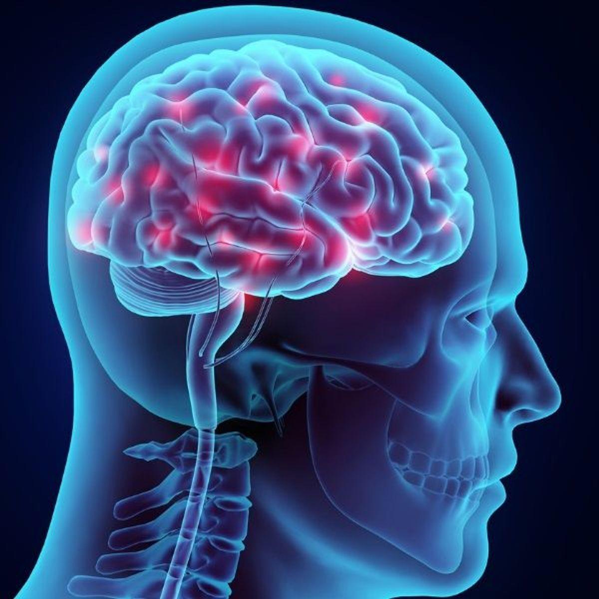 Quels sont les meilleurs aliments pour le cerveau ?
