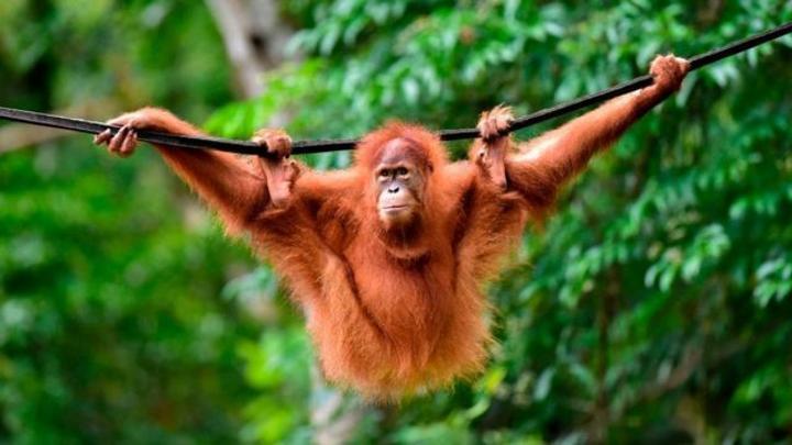 Déforestation: l'huile de palme sera-t-elle bientôt synthétique ?