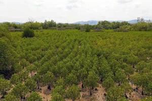Mangroves : Plus de 5 000 ha de forêts sont détruits chaque année