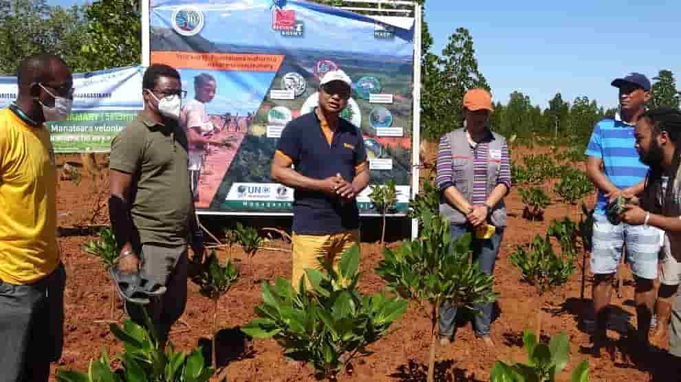 Boanamary - Trois cent mille arbres plantés dans la mangrove