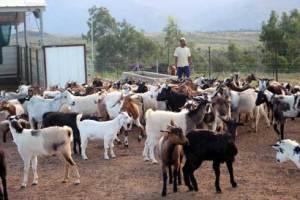 Filière élevage : Vers la mise en place d'une nouvelle stratégie de gouvernance