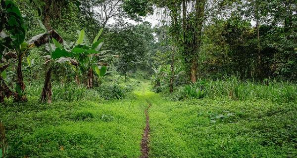 São Tomé-et-Príncipe, un jardin extraordinaire