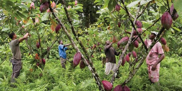 São Tomé-et-Príncipe : bienvenue sur l'île Chocolat