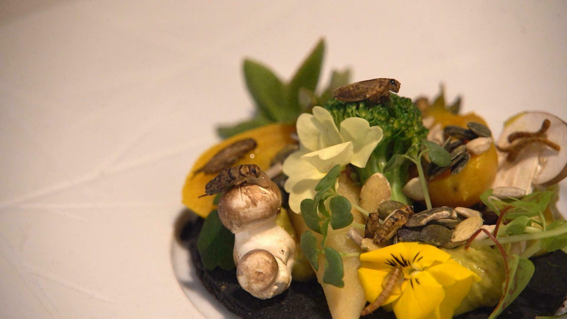Insectes comestibles : des vers au menu