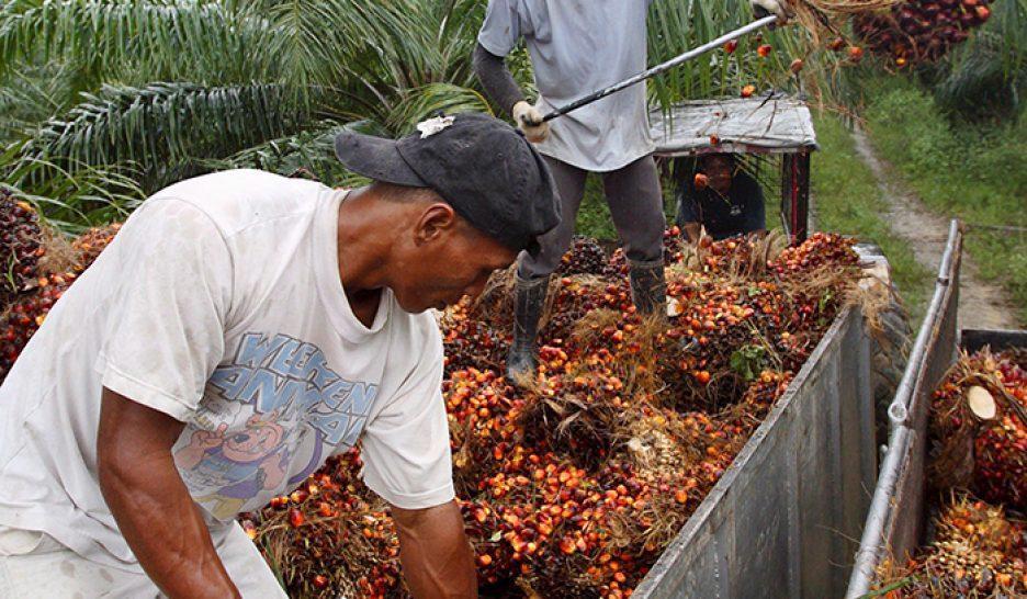 Hausse du prix de l'huile de palme en Côte d'Ivoire: Des consommateurs menacent de «fermer» les usines