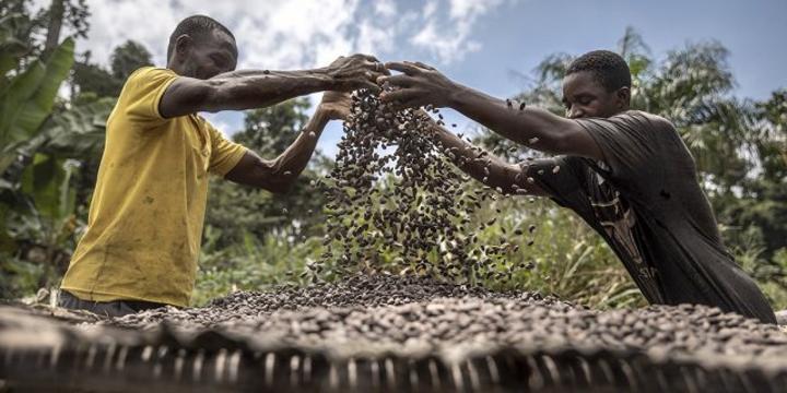 [Chronique] Côte d'Ivoire-Ghana : le goût si amer du chocolat