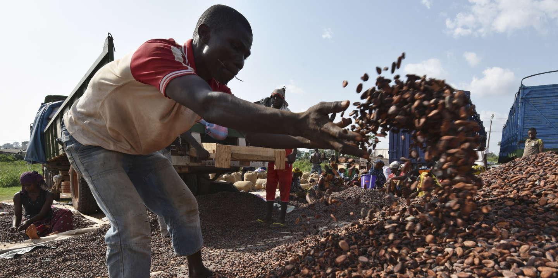 En Côte d'Ivoire, «les planteurs de cacao sont chocolats»