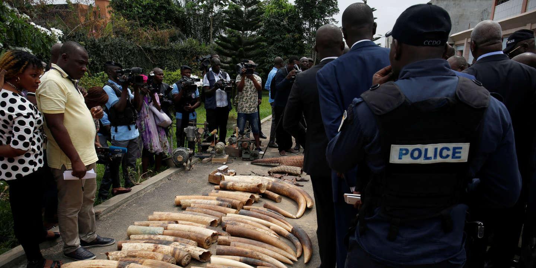 Les éléphants, emblèmes de la Côte d'Ivoire, en voie d'extinction