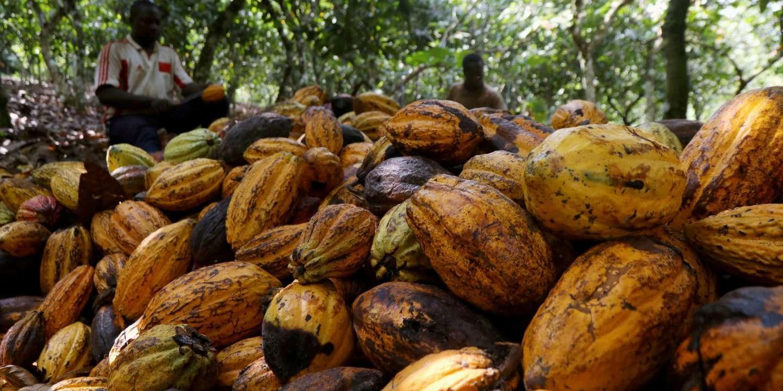 En Côte d'Ivoire, l'entrepreneur qui veut transformer les déchets agricoles en richesse