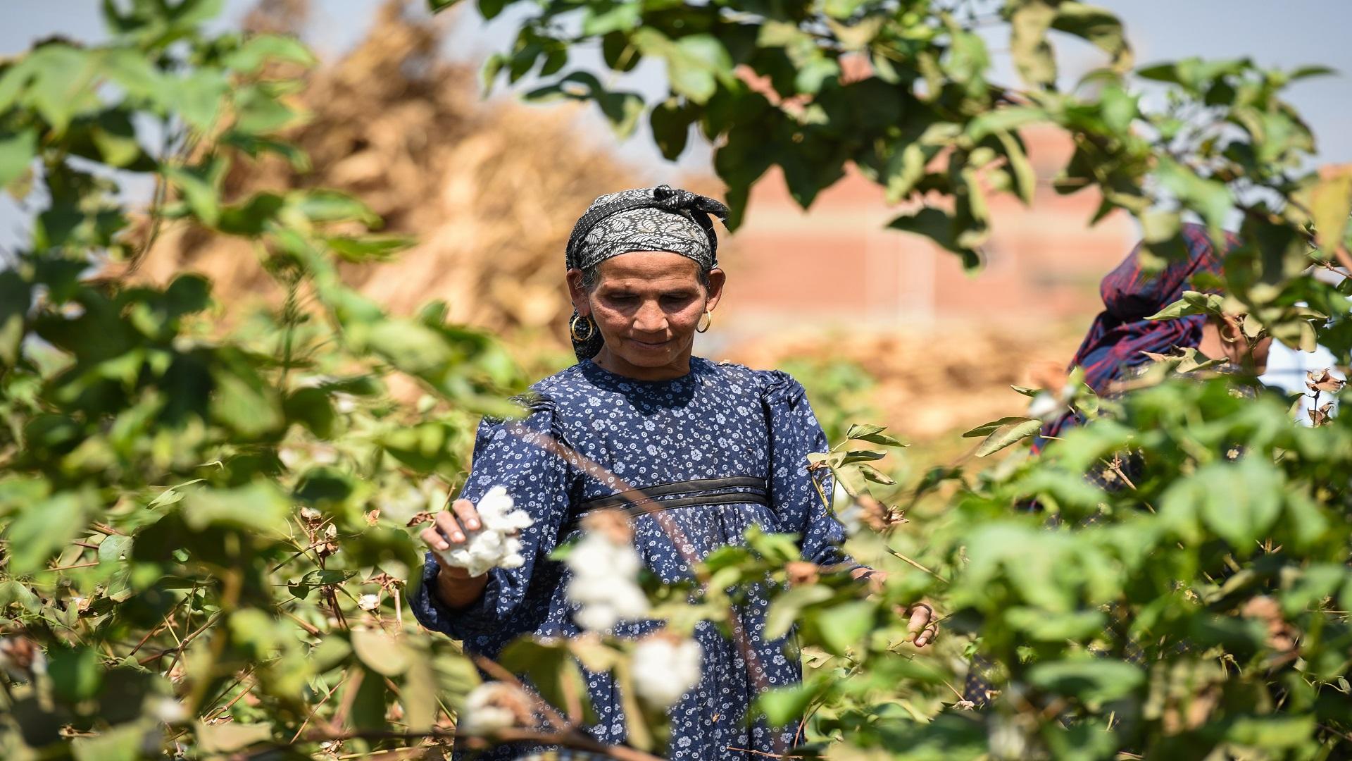 تخشى مصر خروج الأراضي الزراعية من الخدمة