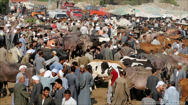مصر: رواج في أسواق المواشي وسط ارتفاع أسعار اللحوم