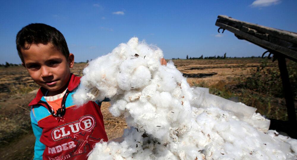السيسي يصدر توجيهات عاجلة للحكومة بشأن زراعة القطن المصري