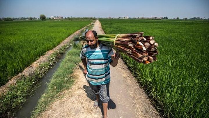 ملامح خطة التحرك المصرية بشأن سد النهضة