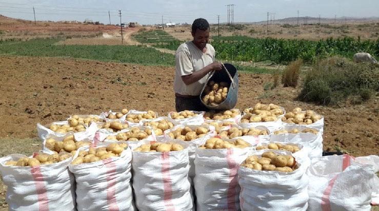 Praiseworthy select potato production
