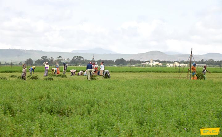 Halhale Dairy Farm