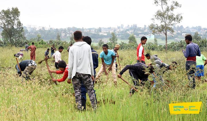 Restoring the Ecosystem of Eritrea