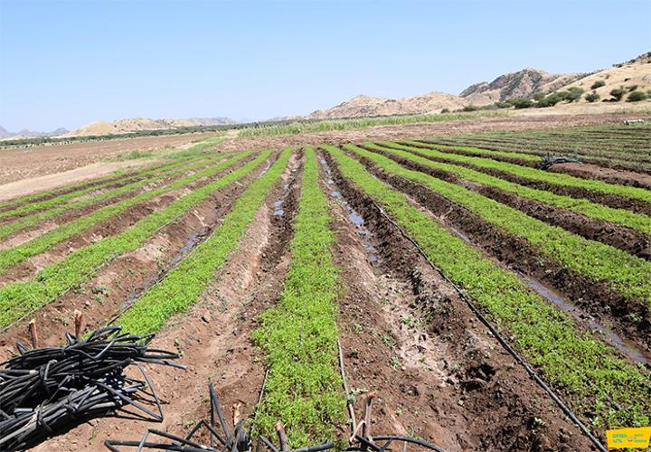 Agriculture Graduates Making Efforts to Boost Production