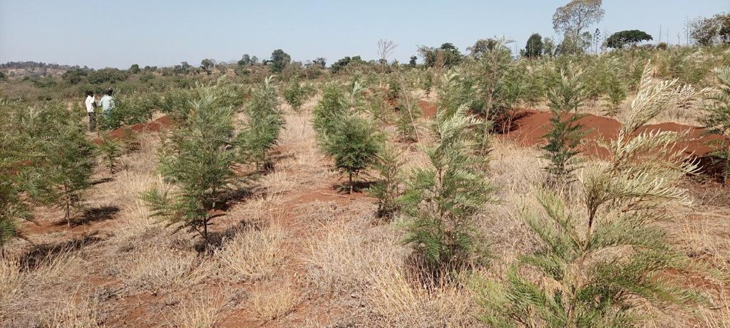 Premier Says 18 Billion Seedlings Planted in Three Years