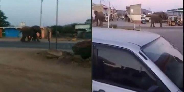 Watch Two Elephants Take Over Kenyan Town