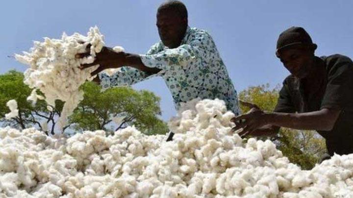 Campagne agricole 2021/2022 : « Le prix du coton graine est fixé à 280 FCFA le Kg », une première selon Dr Nango Dembélé