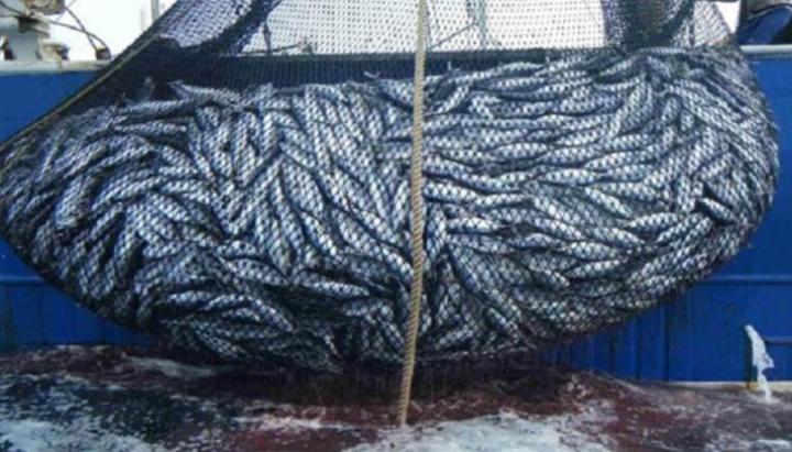 صحيفة فرنسية تنشر موضوعا عن قطاع الصيد بموريتانيا