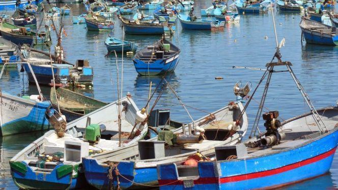 تراجع نسبة منتجات الصيد الساحلي والتقليدي خلال 2020