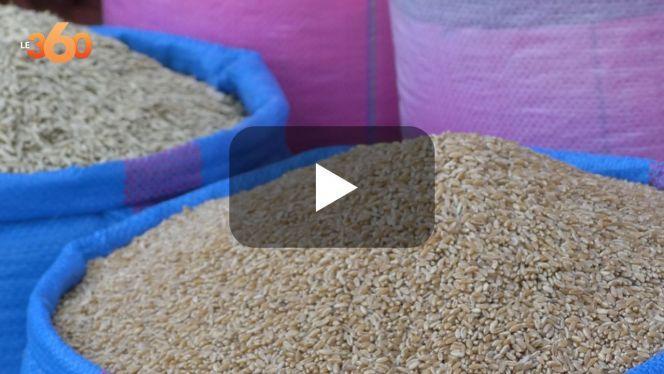 بالفيديو: القمح المحلي يختفي من الأسواق بسبب الجفاف