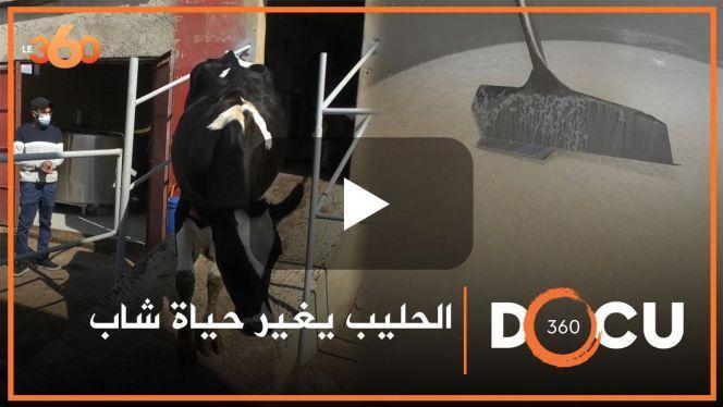 بالفيديو: قصة نجاح عِمادُها تعاونية للحليب ببنسليمان