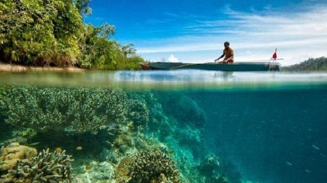 الأمم المتحدة تحذر من اختفاء الشعاب المرجانية بحلول نهاية القرن