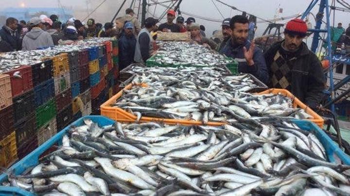 """الوسطاء يُحققون أرباح خيالية من تجارة """" السمك"""" في رمضان"""