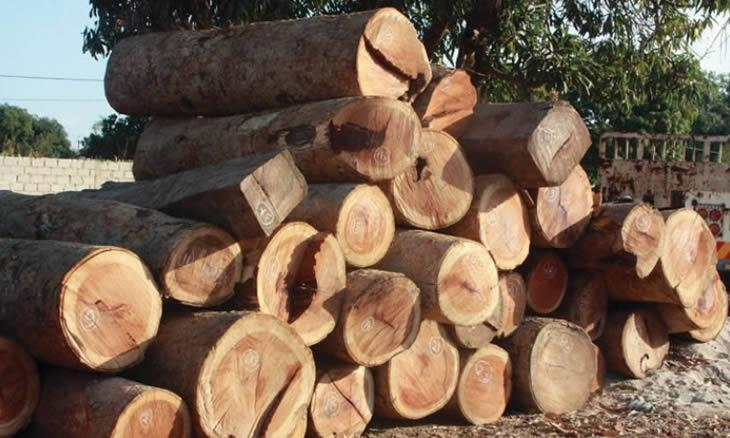 Mozambique: Authorities seize 2,000 cubic metres of illegal timber for export