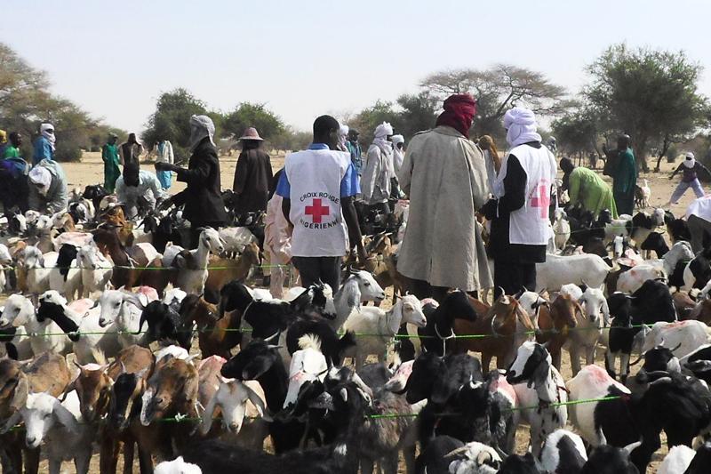 Niger: 3,5 millions de têtes de bétail vaccinées par le gouvernement avec l'appui de la Croix Rouge et du CICR