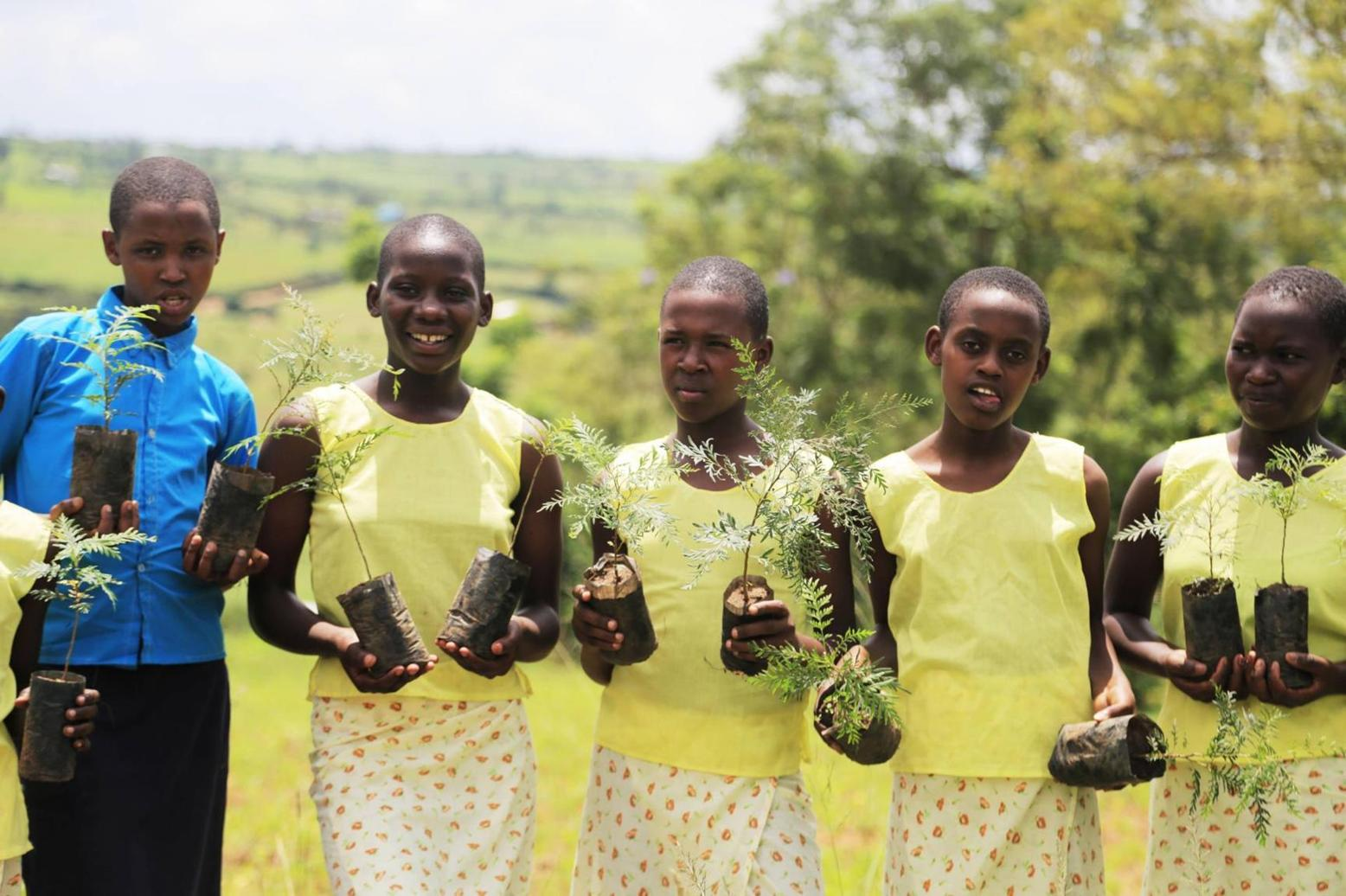 Rwanda to plant over 43 million trees in new campaign