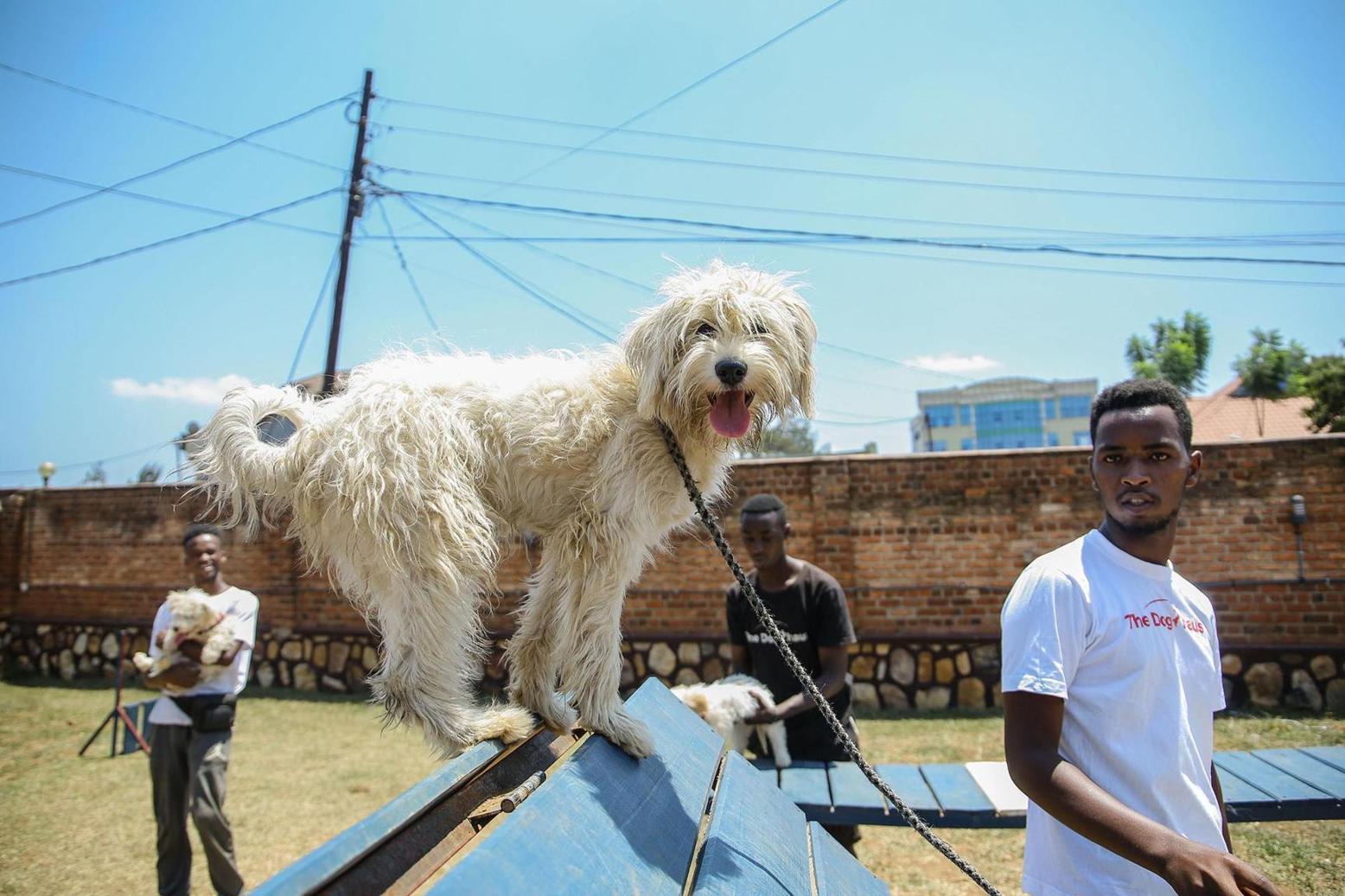 What do you do when your pet dies in Rwanda?