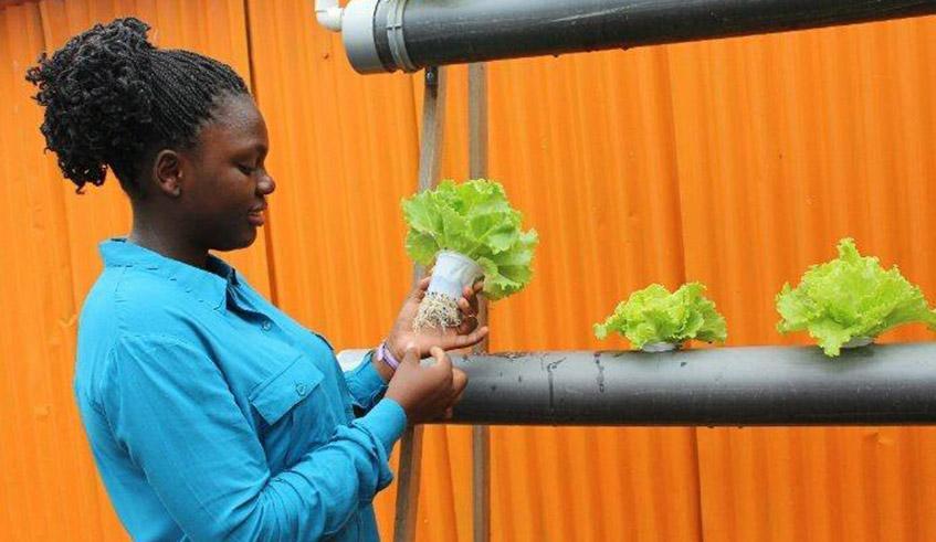 22-year-old student pioneers hydroponic farming in Rwanda