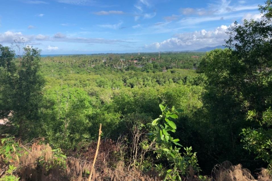 علماء في ماليزيا يبحثون بدائل اقتصادية لقطع أشجار الغابات