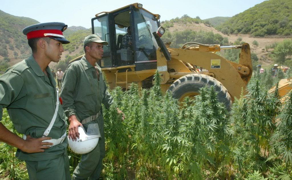 كبير المحللين في المبادرة العالمية : المغرب يتخذ الأراضي الصحراوية معبرا لإغراق منطقة الساحل بالمخدرات