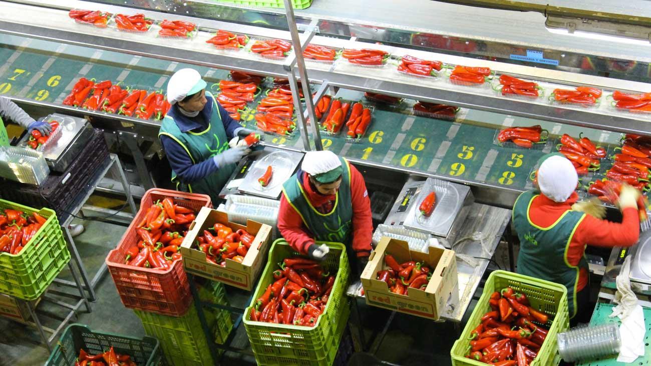 مدريد تحشد الأوروبيين لتقييد تصدير الخضر والفواكه المغربية إلى السوق المشتركة