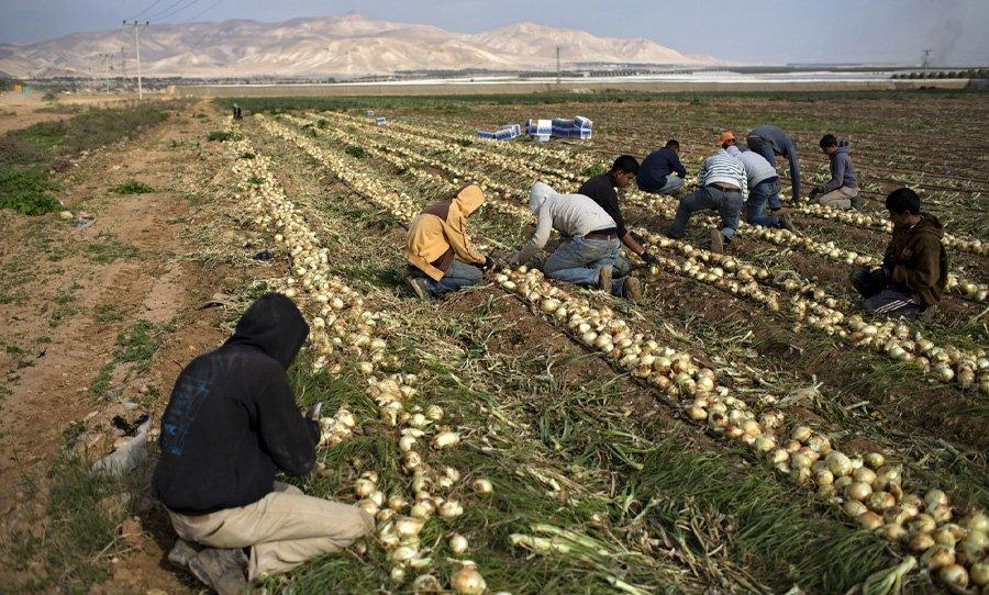 اسبانيا: مزارعون لصالح تنفيذ الحكم الأوروبي حول اتفاقيات الزراعة والصيد وأحزاب قومية تبدي دعمها للبوليساريو