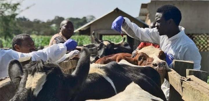 Lutte contre les maladies animales : La FAO et l'EISMV signent un protocole d'accord